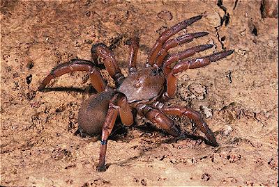 Door Trap Spider & Trap Door Spider \\u201cgreat Ocean Journey ...