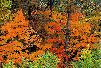 Temperate deciduous forest fall - photo#9