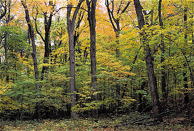 Forest conservation pictures